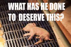 Animal Liberation Worldwide