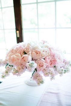 Gorgeous Pale Pink C
