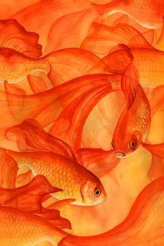 orange - What about ORANGE? So vibrant, strong and bold- some dynamic orange inspiration today. Mellow Yellow, Orange Yellow, Orange Color, Orange Fish, Orange Roses, Light Orange, Orange Shades, Burnt Orange, Orange Aesthetic