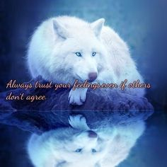 Ideas Quotes Beautiful Children For 2019 Wolf Qoutes, Lone Wolf Quotes, Wolf Spirit Animal, Animal Spirit Guides, Baby Wolves, Red Wolves, White Wolves, Totems, Animals And Pets