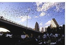 Austin has 1.5 million bats under the Congress Ave bridge. Go at sunset and watch them fly...