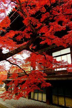 Dreams of Japan