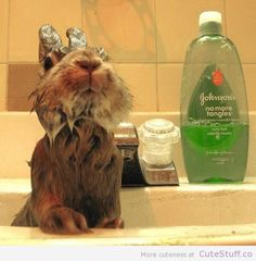 Bunny bath