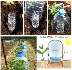 "Grow vegetables with 10 times less water with ""Solar Drip Irrigation."" This is how we can eliminate completely the evaporation losses!  Make sure you use BPA free bottles!!"
