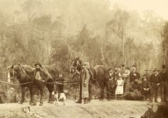 Formation of Mt Lyell Railway. Tasmanian Archive and Heritage Office Commons. Van Diemen's Land, Aboriginal History, Old Portraits, Tasmania, Dog Photos, Old Pictures, Historical Photos, Family History, The Past