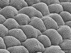 microscopic - Google Search