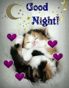 Good night sister and yours, sweet dreams 😋🌜💘🌛🌜☝🌛💖. Good Night Cat, Good Night Sister, Good Night Prayer, Good Night Sleep Tight, Cute Good Night, Good Night Friends, Good Night Blessings, Good Night Sweet Dreams, Good Night Image