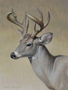 Coues Deer Portrait 12x9, painting by artist George Lockwood