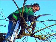 Obstbaumschnitt Praxiswissen - Teil 1