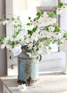 blooming dogwood branches + antique French milk canister · Maria of Dreamy Whites Fresh Flowers, White Flowers, Beautiful Flowers, Dogwood Flowers, Exotic Flowers, Flowers Garden, Yellow Roses, Purple Flowers, Pink Roses