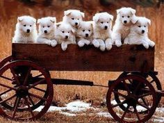 I want one!...the wagon