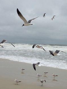 Daytona Beach Seagulls