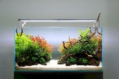 Great Amazing Tips Your New Aquarium Decorations If in case you have achieved the right planning to your new aquarium, you have already bought, or in any other case acquired, every thing it& essenti. Planted Aquarium, Saltwater Aquarium Fish, Freshwater Aquarium, Aquarium Garden, Aquarium Landscape, Nature Aquarium, Colorful Fish, Tropical Fish, Aquascaping