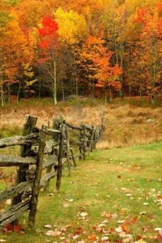 Just beautiful! Miss scenery like this! Stock Photo - An old wooden fence leading the viewer into the colorfull woods during Autumn. Beautiful World, Beautiful Places, Beautiful Pictures, Beautiful Scenery, Country Fences, Autumn Scenes, Seasons Of The Year, Fall Pictures, Belle Photo