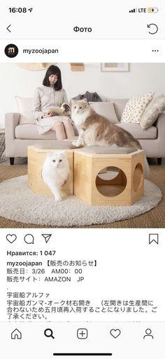 Cat Playhouse, Dog Organization, Cat House Diy, Diy Cat Toys, Dog Furniture, Cat Room, Cat Accessories, Cat Wall, Pet Bowls
