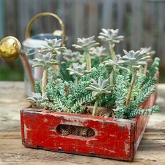 An old beverage bottle case gets new life as a home for container plants. More creative ideas for garden containers: http://www.midwestliving.com/garden/container/creative-containers/?page=2