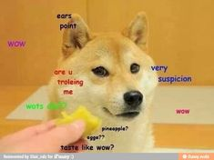 very suspicion, are u troeling me? wots this? are u sure it tastes like wow? wow… very suspicion, are u troeling me? wots this? are u sure it tastes like wow? wow such not sure, so doubt Doge Dog, Doge Meme, Funny Animal Memes, Funny Animals, Cute Animals, Dankest Memes, Funny Memes, Funny Humour, Funny Cute
