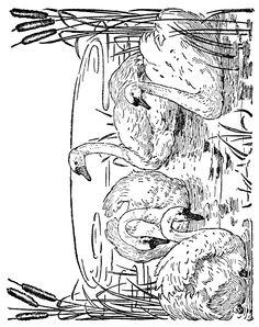 Animal Coloring Pages - 2