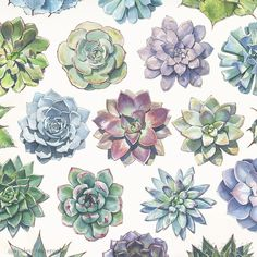 Some of my favorite watercolor succulents that I've painted. Succulents Wallpaper, Succulents Drawing, Watercolor Succulents, Watercolor Flowers, Succulents Painting, Watercolor Print, Watercolor Paintings, Botanical Art, Art Inspo