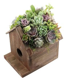 Invite some of the outdoors in with this rustic birdhouse display filled with vibrant succulents. The distressed wood construction brings rustic charm to your space, countered by the natural texture and lush coloration of the plants.