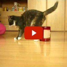 Suki the Cat's Agility Training - what an amazing kitty!