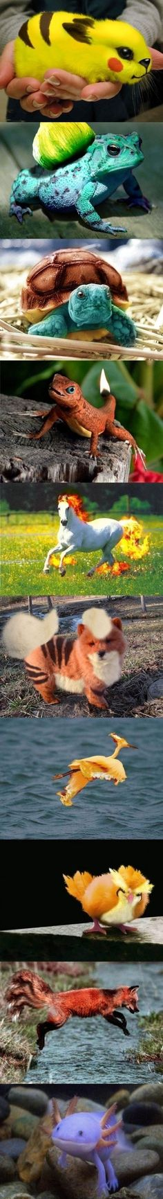 Real life pokemon  If only.....