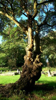 I like the tree trunk taken by ginge on the 22/9/2016 walsall cemetery