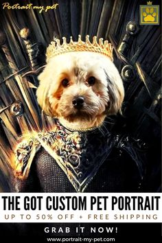 Perfect Image, Perfect Photo, Love Photos, Cool Pictures, Pet Costumes, Queen, Pet Portraits, Your Pet, Teddy Bear