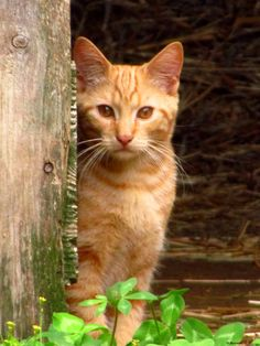 Barn Cats On Pinterest Barns Cats And Kittens