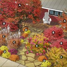 north-central plan Plant list:  Apple serviceberry (Amelanchier x grandiflora 'Autumn Brilliance'), Zones 3–7 Dwarf burning bush (Euonymus alatus 'Compactus'), Zones 4–9 Flame grass (Miscanthus 'Purpurascens'), Zones 5–9 Mums (Chrysanthemum spp.), Zones 5–7 or annual Panicle hydrangea (Hydrangea paniculata), Zones 4–8 Staghorn sumac (Rhus typhina Tiger Eyes), Zones 4–8