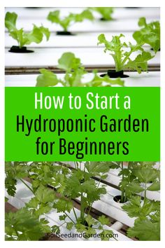 Indoor Hydroponic Gardening, Hydroponic Farming, Hydroponics System, Hydroponic Vegetables, Gardening For Beginners, Gardening Tips, Urban Gardening, Urban Farming, Vegetable Gardening