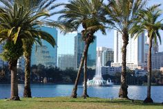 Lake Eola Park Picnics, swan boats, great place for a run, a favorite place to spend any beautiful day.