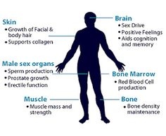 Symptoms of Low Testosterone You Cannot Ignore -Posted MARCH 8, 2014 by POSITIVEMED