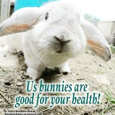 My stress levels went down to normal! #rabbit #bunnies #bunny #cuteanimals #pets