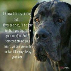 Résultats de recherche d'images pour « animal quotes » Dog Quotes, Animal Quotes, Pet Dogs, Dogs And Puppies, Doggies, Corgi Puppies, Weiner Dogs, I Love Dogs, Puppy Love