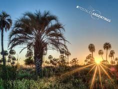 #PostalesArgentinas Con su paisaje poblado de palmeras y la abundancia de su fauna silvestre, disfrutamos del Parque Nacional El Palmar