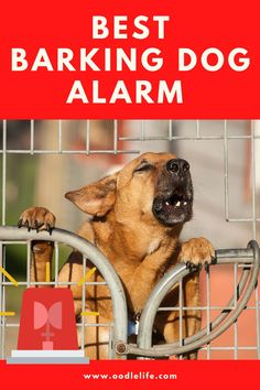You can outsmart a home intruder by using a barking dog alarm. Potty Training Tips, Training Your Dog, Puppies Tips, Dogs And Puppies, Diy Dog Treats, Homemade Dog Food, Dog Behavior, New Tricks, All Dogs