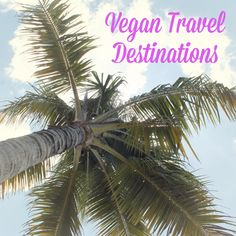 Vegan hotels are popping up all over the world. Here's a guide to help you plan your next dream vacay!