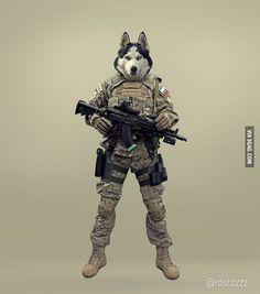 Tactical Husky - 9GAG
