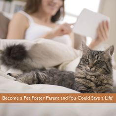 Become a Pet Foster Parent and You Could Save a Life!
