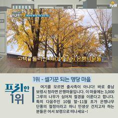 프리한19 막 찍어도 인생샷 나오는 가을 여행지 19 정보 모음!