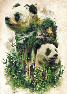 Panda Painting, Teddy Bear Cartoon, Teddy Bears, Earth Poster, Nature Posters, Thing 1, Animal Posters, Bear Art, Surreal Art
