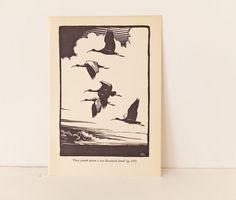 Ibis flying