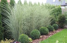 Ornamental Grass Landscape, Landscape Grasses, House Landscape, Landscape Architecture, Landscape Bricks, Landscape Timbers, Revit Architecture, Gardening, Ideas
