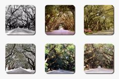 All of these images of S. Boundary in Aiken were taken by me...spreading out winter, spring, summer, and fall.  An order requiring S/H will be extra.  Prices DO INCLUDE state taxes.