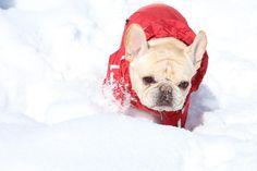 雪遊び 投稿者:うめ父さん