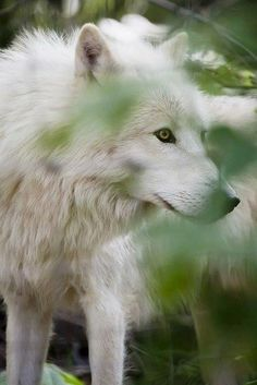 Wolf Get Informed with Worthy Readings. http://www.dailynewsmag.com