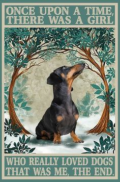 Black Dachshund, Funny Dachshund, Mini Dachshund, Daschund, Animals And Pets, Cute Animals, Baby Animals, Cat Posters, Dogs And Puppies