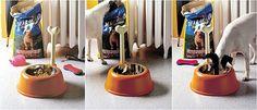 Alessi Lupita Dog Bowl - Gift Ideas - GR Shop Canada