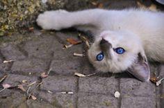 Play with me prrrrrrrrrrrrr ...